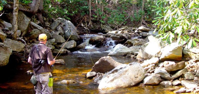 Fly fishing Tea Creek