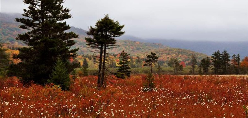 Cranberry Glades at Birthplace of Rivers