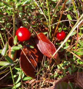 cranberry-glades